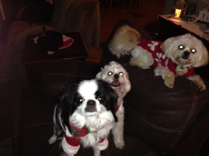 Christmas Pups: Rosco, Kaylee